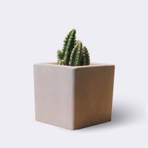 cactus2-free-img.jpg | Jual ikan koi Harga Grosir